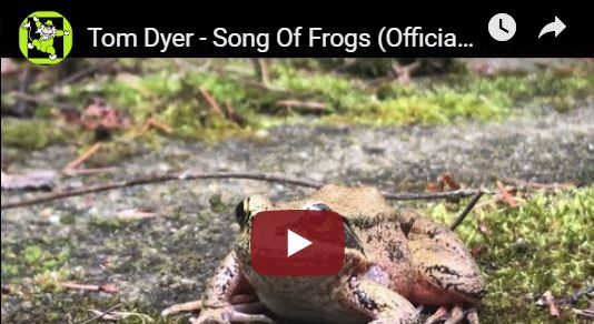 "New Tom Dyer Video ""Song of Frogs"""
